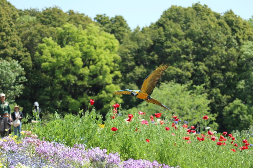ズーラシアのバードパフォーマンスが里山ガーデンに!のアイキャッチ画像$>