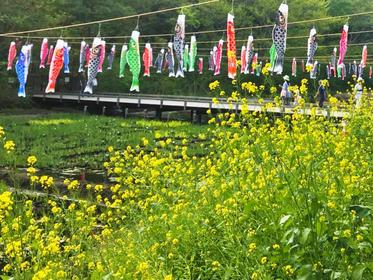 谷戸の菜の花畑2