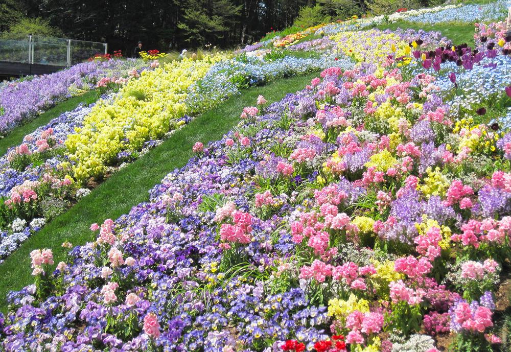 2018年 春の里山ガーデンフェスタのアイキャッチ画像$>