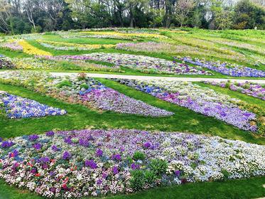横浜の花で彩る大花壇1