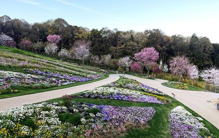 横浜の花で彩る大花壇2