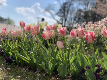 横浜の花で彩る大花壇3